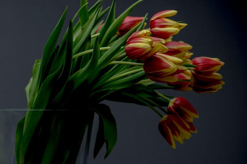 Productfoto van een bos tulpen